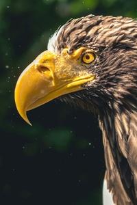 720x1280 Eagle 5k