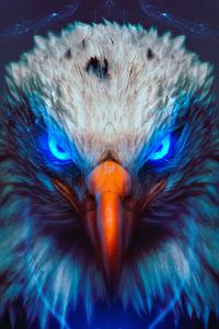 1440x2560 Eagle Eye