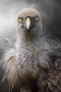 320x568 Eagle In Rain