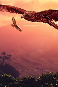 Eagle Journey