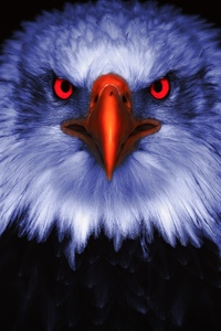 240x400 Eagle Raptor Eyes 8k