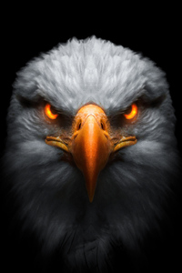 240x320 Eagle Red Glowing Eyes