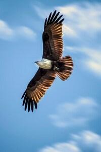 240x320 Eagle