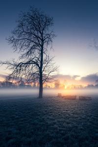 1080x2160 Early Morning Autumn Sunrise