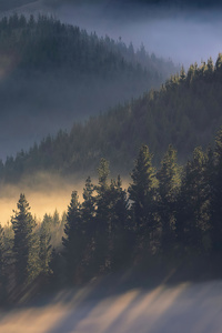 240x320 Early Morning Sun Rays Over Trees Mountains 4k