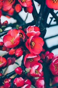 Earth Blossom