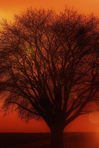 Earth Orange Road Silhouette Sun Sunset Tree