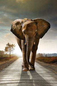 360x640 Elephant Walking On The Road Hdr 8k