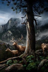 Elk Forest Landscape Conservation