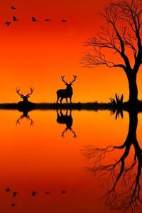 Elk On Horizon Sunset Evening