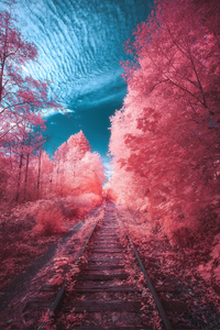 360x640 Fairy Tail Autumn Path
