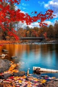 1440x2560 Fall Foliage