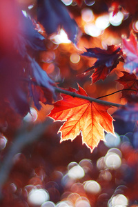 1280x2120 Fall Leaves Trees Sunlight Colorful Sun Beams