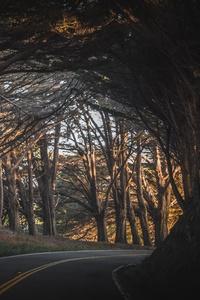 Fall Road Trees Landscape