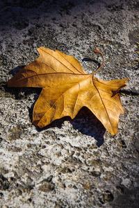 Fallen Autumn Leaf 5k