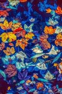 Fallen Leaves In Water 5k