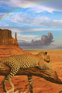 800x1280 Fantasy Leopard Rainbow