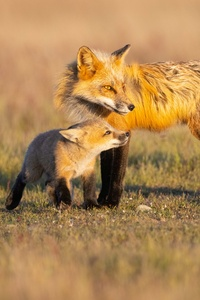 480x854 Father And Daughter Fox 5k