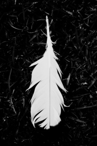 1440x2960 Feather Black And White 5k