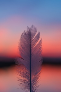 1080x2280 Feather Focus Blur Sunset 5k