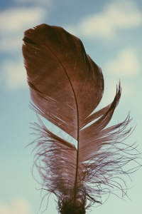 Feather Sky 4k