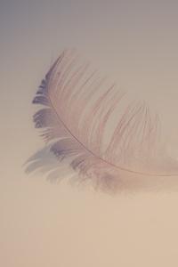 1080x1920 Feather Soft 5k