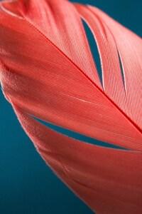 Feathers Macro