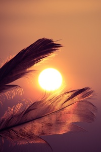 1080x2280 Feathers Sunbeams Of Sun 5k