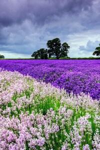 320x480 Field Flowers