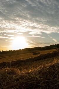 480x854 Field Grass Trees Sunlight