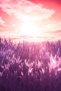 640x960 Field Scenery 5k