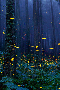 Fireflies Forest 4k