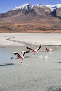 1242x2688 Flamingo Birds 5k