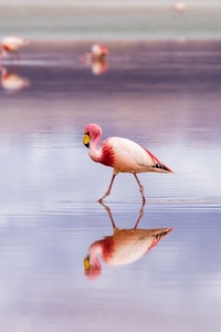320x568 Flamingo
