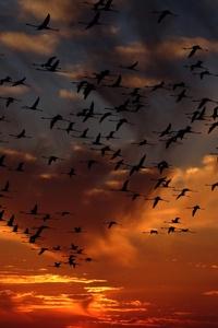 Flamingos Flight 4k