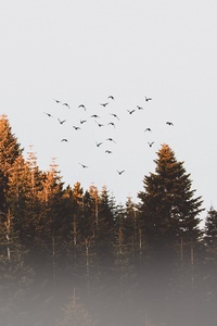 Flock Of Birds Flying Trees Landscape View 4k