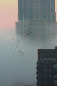 Flock Of Birds Over A Foggy Seattle 5k