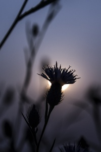 1080x1920 Flora Flower Focus Blur 5k