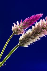 Flora Flowers Stock 4k