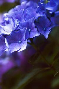 320x480 Flower 4k