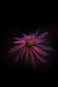 Flower Dark Background 4k