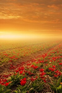 320x568 Flower Fields Nature