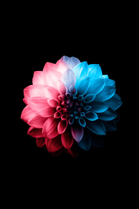 320x480 Flower Oled Dark 5k