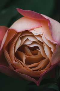 Flower Plant Bokeh Blur 5k