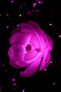 2160x3840 Flower Shape Artistic Light