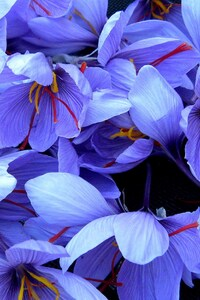320x480 Flowers 4k