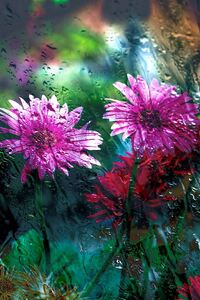 320x480 Flowers Behind Glass Drops