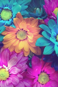 1440x2960 Flowers Colorful Petals