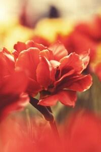800x1280 Flowers Macro