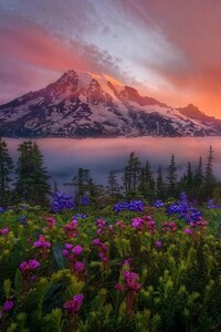 Flowers Mountains